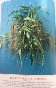 Jamie used Oncidium orchids and Pilea 'Aquamarine' in this vertical planter... Photo Courtesy Southern Living Magazine