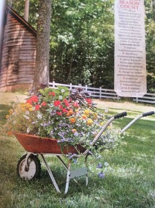 I filled this old wheelbarrow up with lots of zinnias, fan flower and vinca, then added some purple basil, ornamental Kent's Beauty oregano, and scented geranium for additional foliage and texture. It bloomed all summer! Photo Courtesy Southern Living Magazine