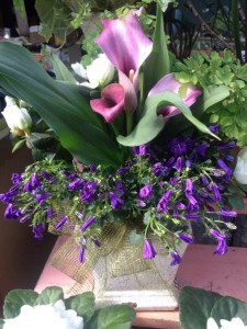 A calla lily azalea, campanula and fern in shades of purple, lavender, white and green...
