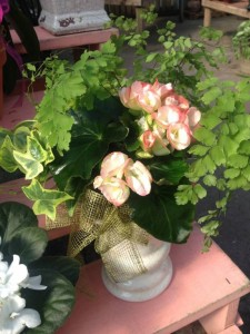 A sweet pot filled with a Rieger begonia, ferns and ivy...