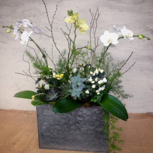 White and yellow Phalaenopsis orchid arrangement with azaleas and succulents....