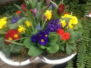 February is full of bright colors...primroses, hyacinths and tête á tête narcissus...