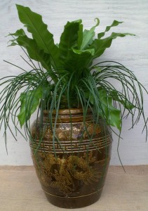A customer's container became home to a bird's nest Fern and agave...
