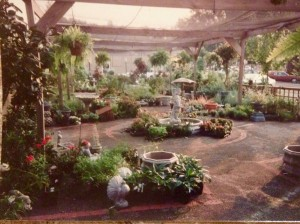 "1991 - See the red lines outlining the ""beds""? Shade house is flat...covered by shade cloth."