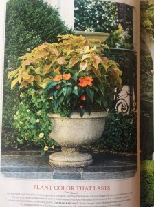 Begin your planting combinations with one plant you love, and add to it. I wanted to use this coleus, then added the trailing torenia and SunPatiens to compliment it... Photo Southern Living Magazine