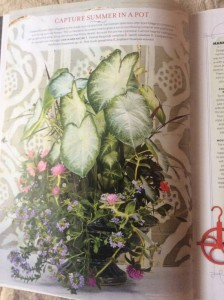 A glazed, blue footed urn was the inspiration for Pinkie's pink, blue, and white combination...the caladiums are a sun tolerant variety called 'Aaron' Photo Courtesy Southern Living