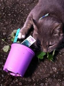 Liam found a pot of catnip...