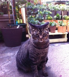 Ozzie is the old man of the greenhouse...