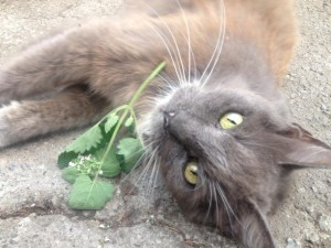 Gracie loved catnip...