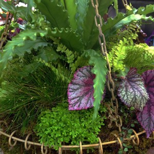 The Rex begonia's leaves stand out in this planting...