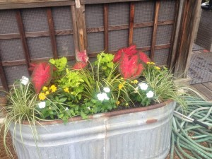 Horse Troughs Planted For Summer