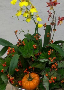 Branches of bittersweet and mini pumpkins accent an oncidium orchid