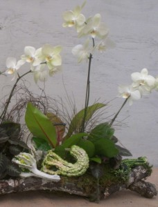 Orchids and Gourds Arrangement