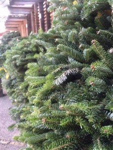 Fraser Fir Wreaths in All Sizes...