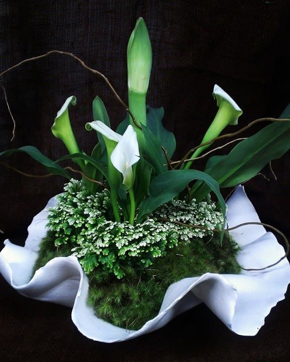 Calla Lily and Frosty Fern