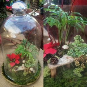 A holiday terrarium...design Kris Blevons