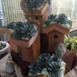 Succulent Roof Bird House