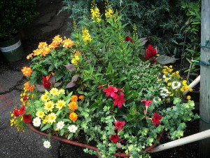Wheelbarrow - Summer Planting