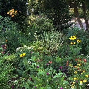 Kris' Garden - July