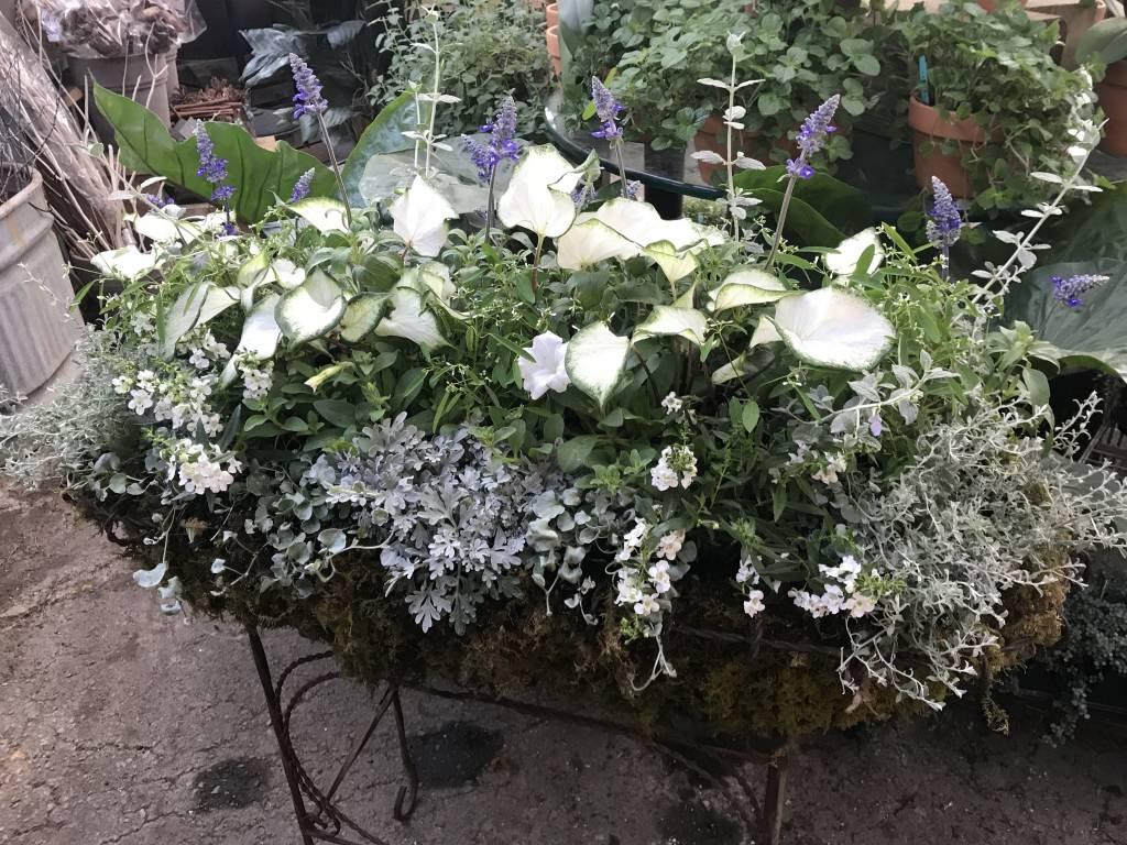 Ideas For Container Gardens In The Sun Oak Street Garden Shop
