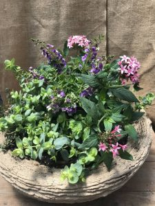 Container Garden For Sun - Trailing Pentas, Spreading Angelonia, Ornamental Oregano