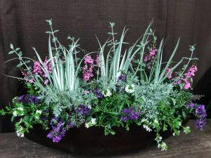 Container Garden For Sun - Iris Pallida, Artemesia, Scaevola, Angelonia, Silver Germander