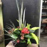 Arrangement with Sanseveria, Anthrium, Dracaena and Airplant