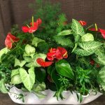 Arrangement with Anthurium and Nephthitis