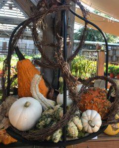 Hanging Pumpkin/Gourd Garden