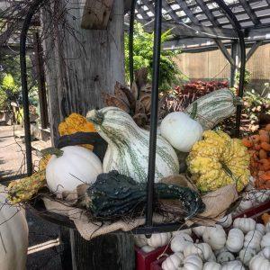 Hanging Pumpkin Gourd Garden