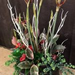 Amaryllis Holiday Arrangement