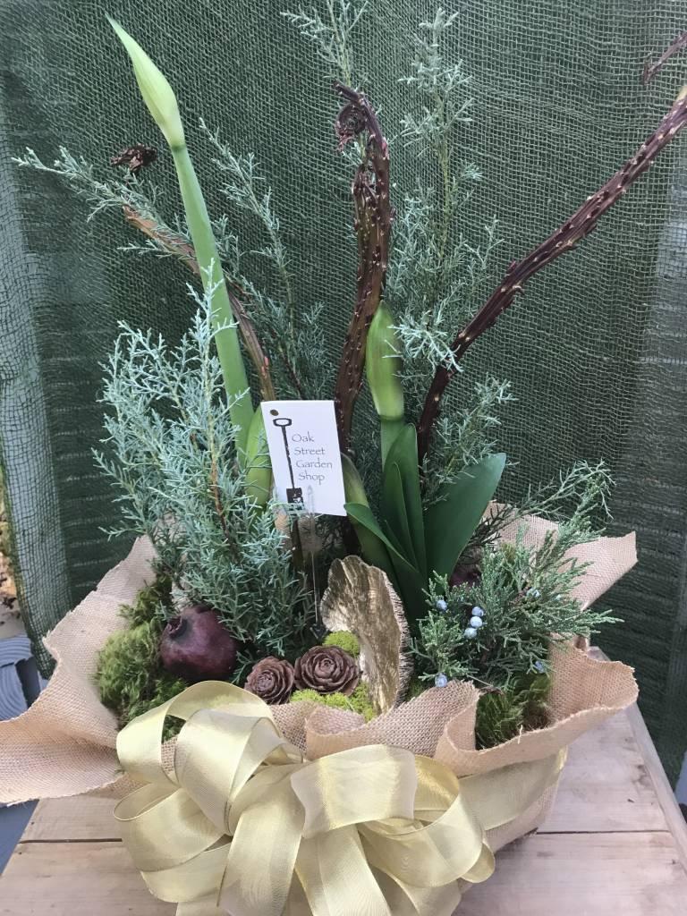 Amaryllis Gift Arrangement