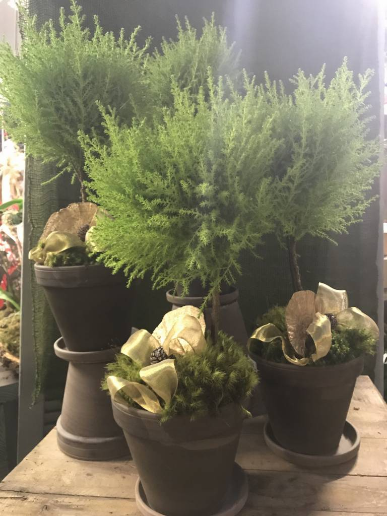 Lemon Cypress Topiaries Dressed For the Holidays