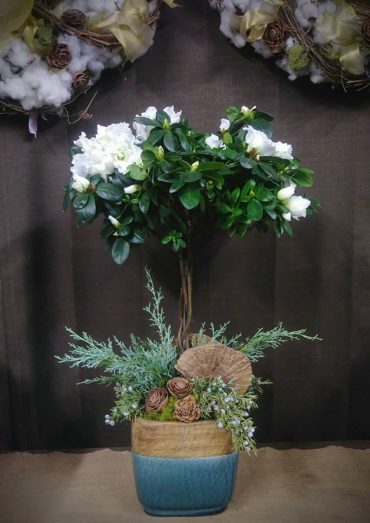 Holiday Arrangement - Azalea Topiary
