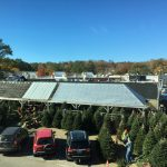 Christmas Trees Arriving