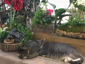 Tacca and Liam In the Greenhouse