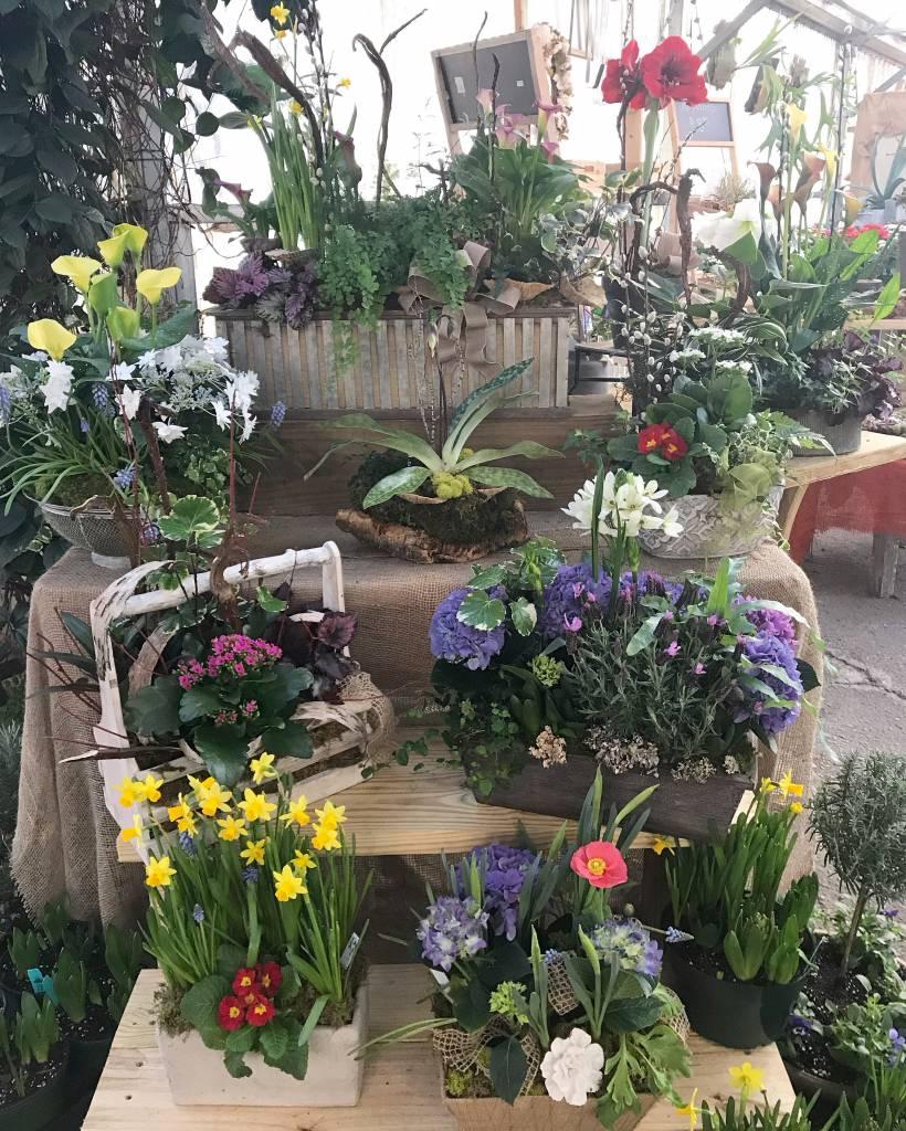 Arrangements in the Greenhouse