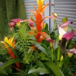 Bromeliad and Calla Arrangement