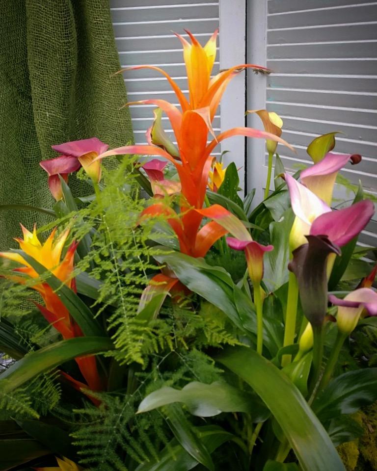 Bromeliad and Calla Arrangement