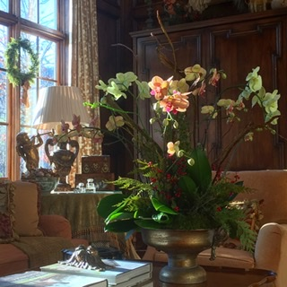 Holiday Orchid Arrangements
