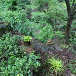 Woodland - Kris' Garden