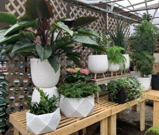 Planters and Houseplants
