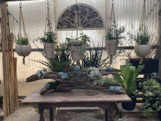 Vignette in the Greenhouse