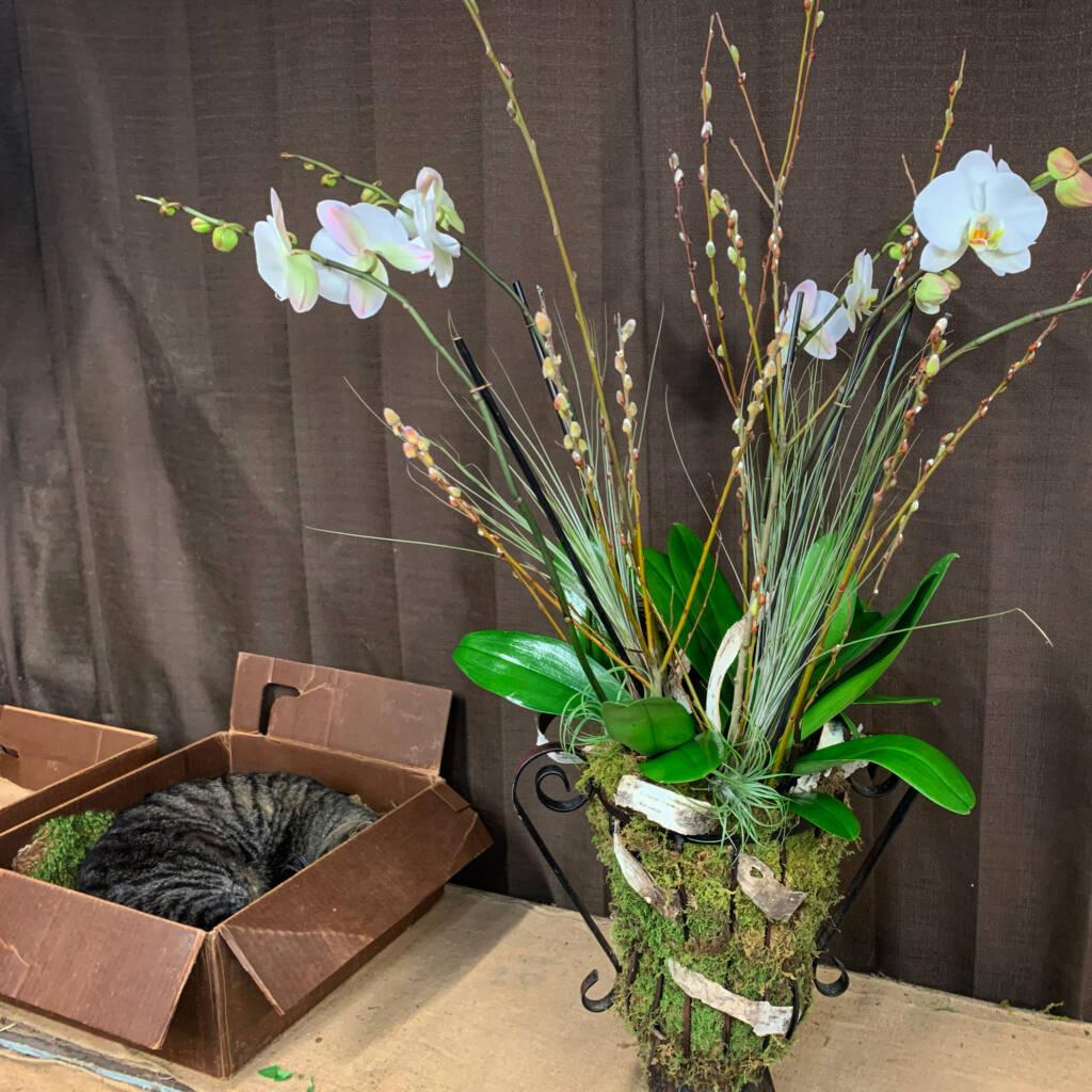 Ozzie and Orchid Arrangement
